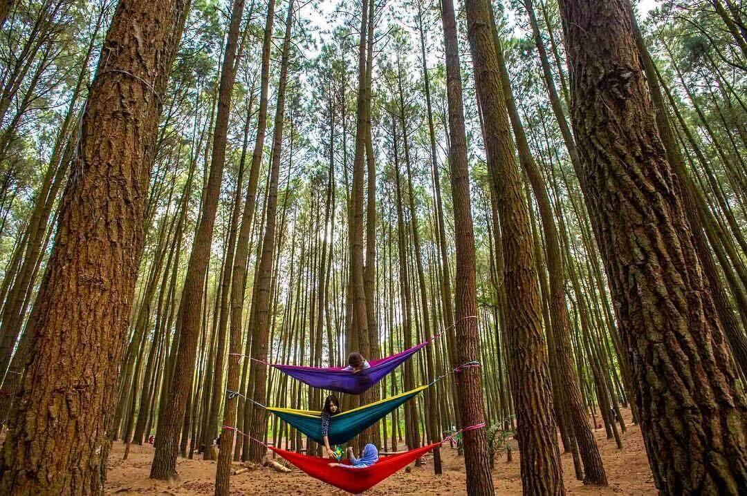 Hutan-Pinus-Mangunan - Bryan tour jogja